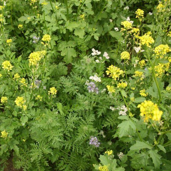 zmes nektarodárný biopás porast